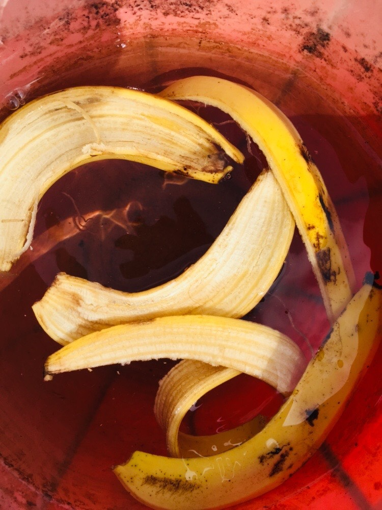 banana peel fertilizer
